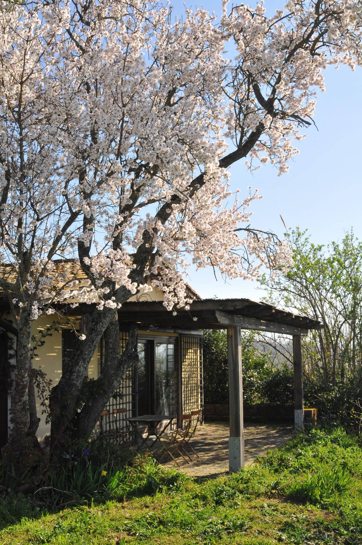 Baum vor dem Agriturismo Le Cerque