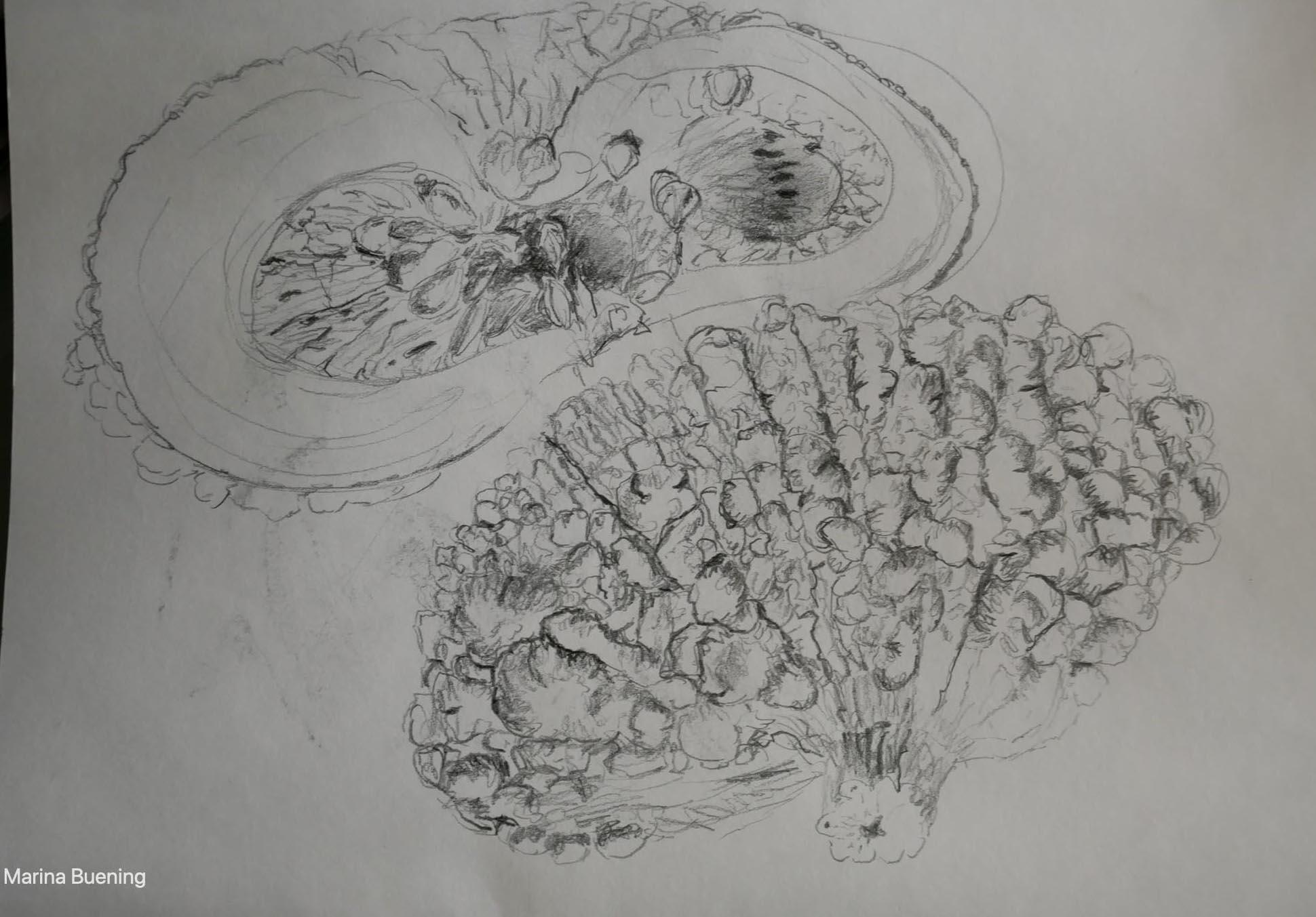 Kürbis zeichnen