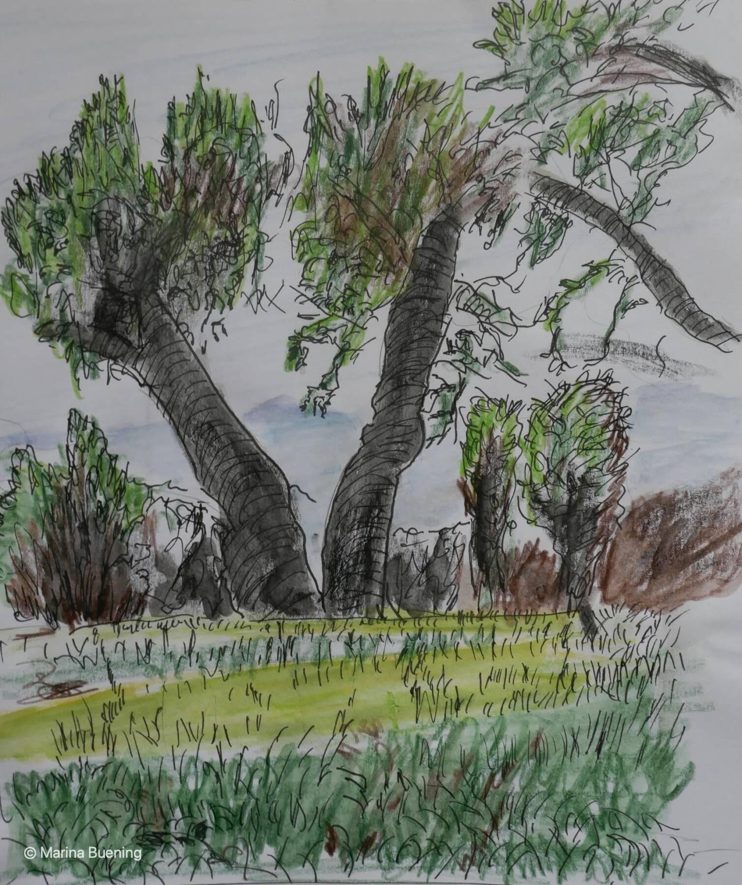 Olivenbäume zeichnen