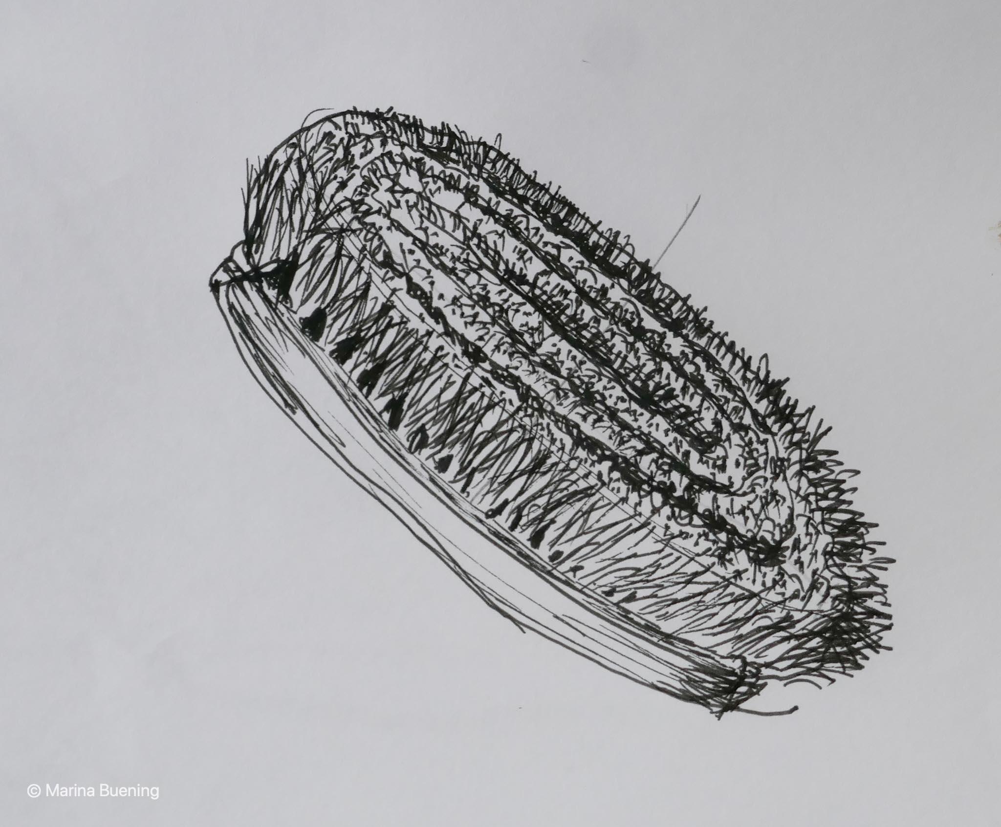 Bürste zeichnen